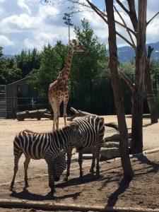 Rapperswil Switzerland Animal Zoo