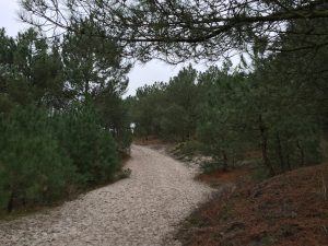Trail running in the dunes and forest around Schoorl