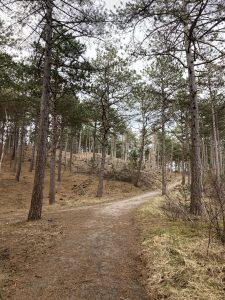 Running trail through the forrest/dunes in Schoorl North Holland